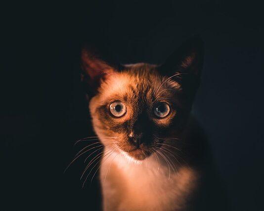 Karma odkłaczająca dla kota